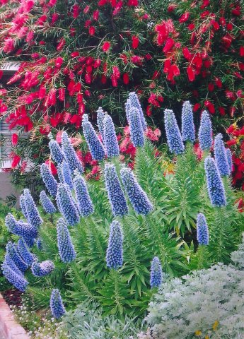 Colourful native and exotic perennials