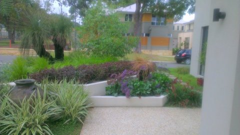 Colourful native garden
