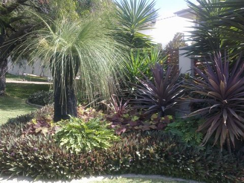 Dry tolerant tropical look landscape design