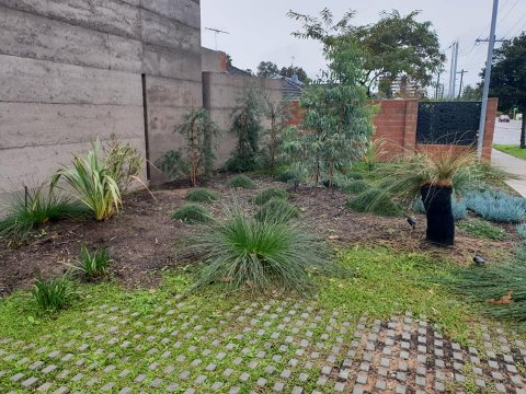 south facing native blend garden