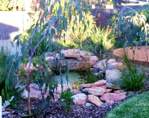 Native frog pond - installed by Think Green