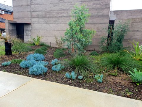 south facing native and succulent garden